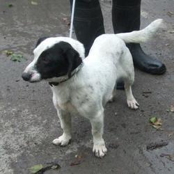 Found dog on 03 Apr 2015 in Slade Boherboy , Saggart. found terrier x now in the dublin dog pound... Date Found: Wednesday, April 1, 2015 Location Found: Slade Boherboy , Saggart