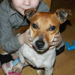 Found dog on 03 Feb 2013 in tallaght. found jack russell male in tallaght area