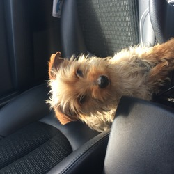 Found dog on 03 Jul 2014 in Clondalkin . Young male found in corkagh park clondalkin Dublin 22 not chipped or neutured