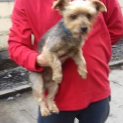 Reunited dog 03 Jul 2017 in Deerpark Lodge , Tallaght. UPDATE OWNER FOUND....found, now in the dublin dog pound.. Date Found: Friday, June 30, 2017 Location Found: Deerpark Lodge , Tallaght