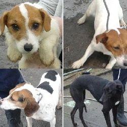 Found dog on 03 Mar 2015 in clondalkin, newcastle, lucan. found dogs in clondalkin, lucan and newcastle. Now in the dublin dog pound