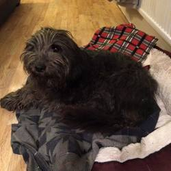 Found dog on 03 Nov 2015 in Walkinstown Library.. found.  Found November 1st, near Walkinstown Library. Female, around 5 years old. Very friendly, but extremely underweight, vet believes she may have been missing for 4/6months. Currently with finder. contact dogs aid