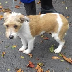 Found dog on 03 Oct 2017 in Russell Drive , Tallaght. found, now in the dublin dog pound... Date Found: