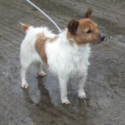 Found dog on 04 Apr 2016 in Glenfield Avenue , Clondalkin. found, now in the dublin dog pound.. Date Found: Friday, April 1, 2016 Location Found: Glenfield Avenue , Clondalkin