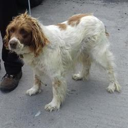 Reunited dog 04 Aug 2017 in Ballinakelly Court , Newcastle. UPDATE.....OWNER FOUND....found, now in the dublin dog pound... Date Found: Thursday, August 3, 2017 Location Found: Ballinakelly Court , Newcastle