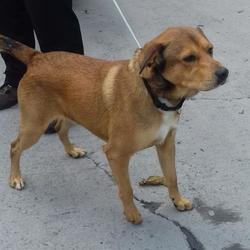 Found dog on 04 Aug 2017 in Neilstown , Clondalkin. found, now in the dublin dog pound... Date Found: Thursday, August 3, 2017 Location Found: Neilstown , Clondalkin