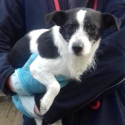 Reunited dog 04 Dec 2017 in Deerpark Terrace , Tallaght. UPDATE REUNITED....found,now in the dublin dog pound.. Date Found: