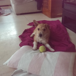 Found dog on 04 Jan 2016 in Blackrock, Dublin. FOUND