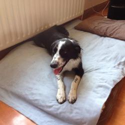 Found dog on 04 Jul 2014 in swords. found swords https://www.facebook.com/photo.php?fbid=10201979612043567&set=o.263076254591&type=1&theater