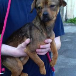 Found dog on 04 May 2017 in Ard Mor Court , Tallaght. found, now in the dublin dog pound... Date Found: Tuesday, May 2, 2017 Location Found: Ard Mor Court , Tallaght