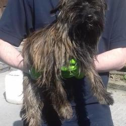 Found dog on 04 May 2017 in Aylesbury Tallaght , Carrigmore. found, now in the dublin dog pound.. Date Found: Wednesday, May 3, 2017 Location Found: Aylesbury Tallaght , Carrigmore