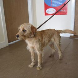 Reunited dog 04 May 2017 in  Wicklow area. UPDATE REUNITED...found,  terrier cross found in the Wicklow area. For further information contact Wicklow Dog Pound at 040444873