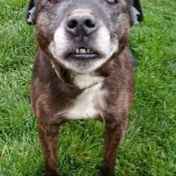 Found dog on 04 Nov 2015 in Tallaght D24. found, contact dspca Older female Staffie found 03/11/15 in Tallaght D24.