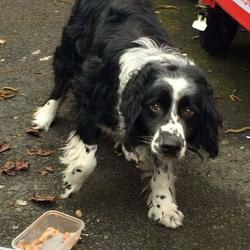 Found dog on 05 Apr 2016 in Blanchardstown corporate Park. found...This beautiful boy was found today in Blanchardstown corporate Park and is currently in Ashton Dog pound so time is of the essence to find his owner.