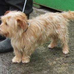 Found dog on 05 Apr 2016 in Moyville , Rathfarnham. found, now in the dublin dog pound... Date Found: Monday, April 4, 2016 Location Found: Moyville , Rathfarnham