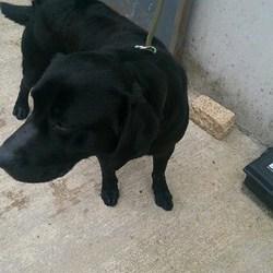 Found dog on 05 Apr 2017 in Balis Manor Navan. found,.. 3yr old approx. ref 121... Found in Balis Manor Navan ..contact Meath pound on 087 0676766..thanks