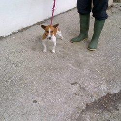 Found dog on 05 Aug 2013 in Ashbourne. Ref. 394 Tyrell. Tyrell was found straying in Ashbourne and left into the vets. He is male entire. 3 years old. Affectionate boy, energetic and friendly. Gets all excited when you go in to see him and immediately wants to jump into your lap.  If you can help this boy...contact Meath pound directly on 01 802 6676...please share or put up posters to help get some of these dogs home...