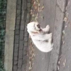 Found dog on 05 Aug 2016 in Leeson Park Dublin. Red collar, heart shaped medallion