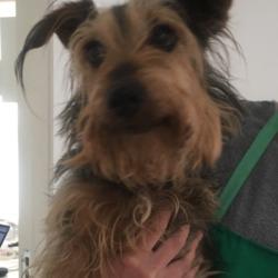 Reunited dog 05 Aug 2017 in Sandymount. Owner found!