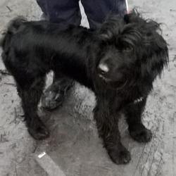 Found dog on 05 Dec 2016 in UCD Newcastle , Newcastle ---. found, now in the dublin dog pound... Date Found: