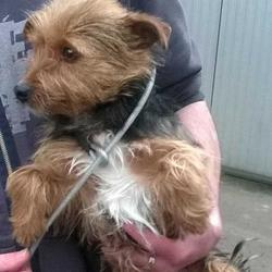 Found dog on 05 Feb 2016 in Village , Lucan. found, now in the dublin dog pound.. Date Found: Thursday, February 4, 2016 Location Found: Village , Lucan
