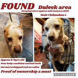 Found dog on 05 Feb 2018 in Duleek. found..straying over the last two week's in the Duleek area contact collon animal sanctuary