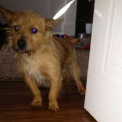 Found dog on 05 Jan 2013 in Clonee. Dog Found : 5/1/2013  Beside Littlepace shops � currently with Dogs trust. http://www.dogstrust.ie/ Address : Ashbourne Road, Finglas, Dublin 11 Reception: 01 879 1000 Lo call: 1890 252 928