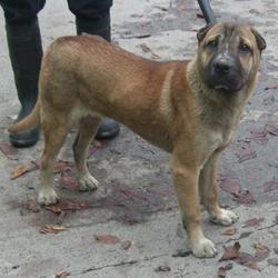 Found dog on 05 Nov 2015 in Cherryfield Way , Templeogue. found, now in the dublin dog pound.... Date Found: Tuesday, November 3, 2015 Location Found: Cherryfield Way , Templeogue