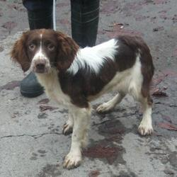Found dog on 05 Nov 2015 in Killinarden Commuinty Centre , Tallaght. found, now in the dublin dog pound... Date Found: Tuesday, November 3, 2015 Location Found: Killinarden Commuinty Centre , Tallaght