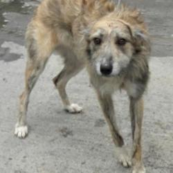 Found dog on 06 Apr 2017 in Village , Clondalkin. found, now in the dublin dog pound.... Date Found: Thursday, April 6, 2017 Location Found: Village , Clondalkin