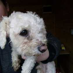 Reunited dog 06 Apr 2018 in Meath Dog Shelter. UPDATE REUNITED...found...Meath Dog Shelter  This little guy was found this morning in beechmount shopping centre. If anybody can tell us any information about him please get in touch. Hopefully get this little dude home shortly