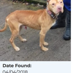 Reunited dog 06 Apr 2018 in Rathlawns, Rathcoole. UPDATE..REUNITED.....WAS MISSING 2.5 YEARS .....found, now in the dublin dog pound....Date Found: 04/04/2018 Location Found: Rathlawns, Rathcoole