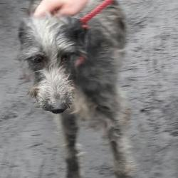 Found dog on 06 Dec 2016 in Village , Palmerstown... found, now in the dublin dog pound... Date Found: