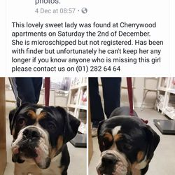 Found dog on 06 Dec 2017 in cheerywood. now in ashton pound..