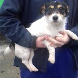 Found dog on 06 Feb 2018 in Tallaght , Tallaght Village. found, now in the dublin dog pound.. Date Found: Friday, February 2, 2018 Location Found: Tallaght , Tallaght Village