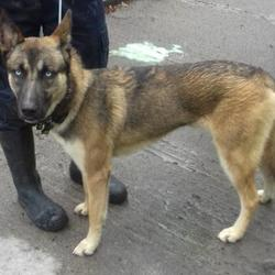 Found dog on 06 Jun 2017 in Ard Mor Court , Tallaght. found, now in the dublin dog pound... Date Found: Monday, June 5, 2017 Location Found: Ard Mor Court , Tallaght