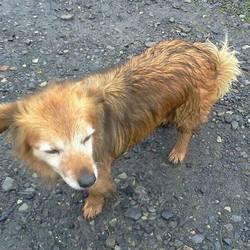 Found dog on 06 Nov 2015 in Gibstown Hall Navan. found,,.....8yrs old (approx.) Terrier x...found in Gibstown Navan...ref 479...contact Meath pound on 087 0676766...