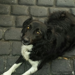 Found dog on 07 Dec 2013 in Lucan/Clondalkin. very friendly collie type dog found in Lucan area.