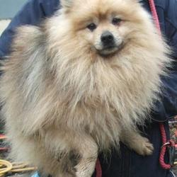 Found dog on 07 Feb 2017 in Firhouse Road , Tallaght. found, now in the dublin dog pound.. Date Found: Monday, February 6, 2017 Location Found: Firhouse Road , Tallaght