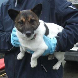 Found dog on 07 Feb 2017 in Old Court , Firhouse. found, now in the dublin dog pound.. Date Found: Monday, February 6, 2017 Location Found: Old Court , Firhouse