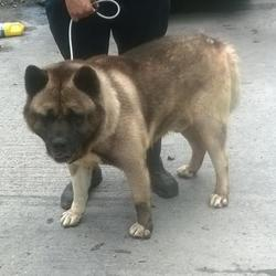Found dog on 08 Aug 2016 in Pinewood , Clondalkin. found, now in the dublin dog pound.. Date Found: Friday, August 5, 2016 Location Found: Pinewood , Clondalkin