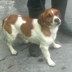 Found dog on 08 Aug 2016 in Whitestown Ind Est , Tallaght. found, now in the dublin dog pound.. Date Found: Thursday, August 4, 2016 Location Found: Whitestown Ind Est , Tallaght