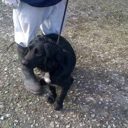 Found dog on 08 Feb 2014 in nobber. straying in Nobber meath. Maybe two years old.  contact Meath pound directly on 01 8026676