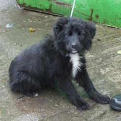Found dog on 08 Feb 2016 in Lucan Village , Lucan... found, now in the dublin dog pound.. Date Found: Friday, February 5, 2016 Location Found: Lucan Village , Lucan