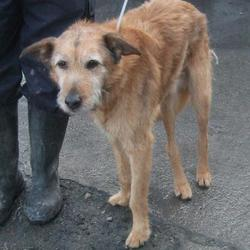 Found dog on 08 Feb 2017 in Beverly Park , Tallaght. found, now in the dublin dog pound... Date Found: Tuesday, February 7, 2017 Location Found: Beverly Park , Tallaght