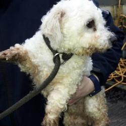 Found dog on 08 Feb 2017 in Clondalkin , Clondalkin... found, now in the dublin dog pound... Date Found: Friday, February 3, 2017 Location Found: Clondalkin , Clondalkin