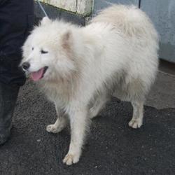 Found dog on 08 Feb 2017 in St Thomas School Kiltalown , Tallaght. found,. now in the dublin dog pound... Date Found: Tuesday, February 7, 2017 Location Found: St Thomas School Kiltalown , Tallaght