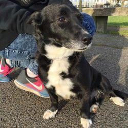 Found dog on 08 Mar 2015 in Dublin 12. Found in Tymon park in Dublin 12. I'm not sure what breed he is but he has collar and is very friendly and house trained. He stayed with us last night. Please help us find is owner I am sure they are missing him.