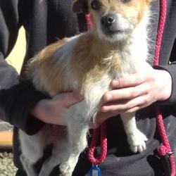 Found dog on 08 May 2017 in Belgard Road , Tallaght. found, now in the dublin dog pound... Date Found: Thursday, May 4, 2017 Location Found: Belgard Road , Tallaght