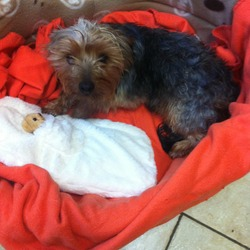 Found dog on 08 Nov 2013 in youghal . Found wondering near youghal early november 13